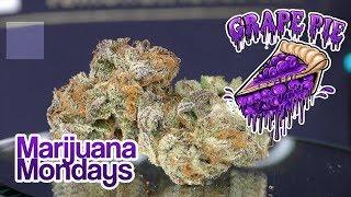 Marijuana Monday -  Grape Pie by Urban Grower