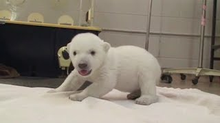 Animals Standing Up For The First Time