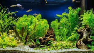 Getting Started with Aquascaping [Live Stream] by Aquarium Co-Op