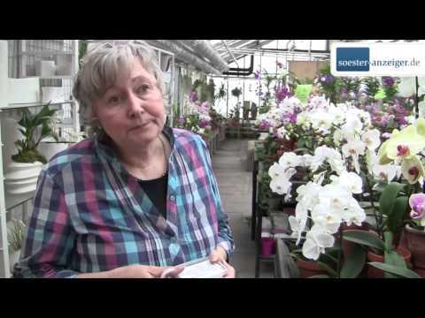 Orchideen Gärtner:  Jens und Dirk Röhl - Orchideen Roehl aus Soest - Expertin verrät, wie Orchideen gedeihen