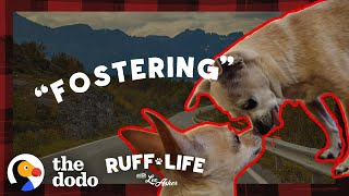 Watch What Happens When A 14-Year-Old Dog Finally Leaves The Shelter | Ruff Life With Lee Asher by The Dodo