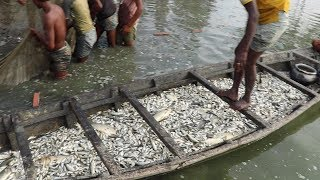 Video A Boat is Filled with Fish & Fish | Unbelievable Fishing! Never Seen SO Much Fish in Your life MP3, 3GP, MP4, WEBM, AVI, FLV Oktober 2018