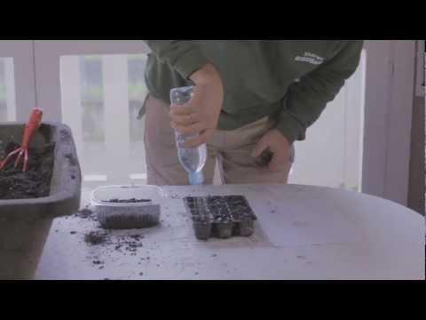 Cómo sembrar tomate en badeja de alvéolos//Balcón comestible//LlevamealhuertoTv