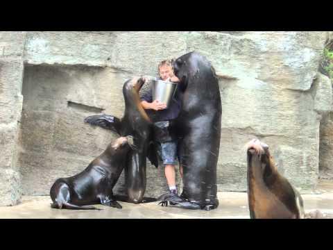 海獅一看到提著魚的飼育員就對他施展「霸氣壁咚」,飼育員的回應也好有愛啊!