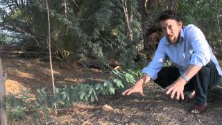 Greening The Desert Video - Parts I And II (French Subtitles)