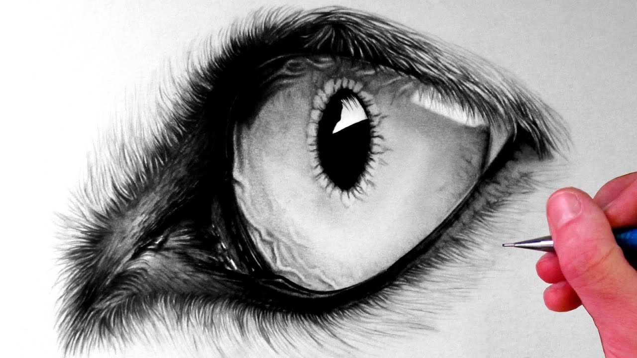 How To Draw A Wolf Eye #howtodrawawolfeye #howto How To Draw Eye Hd Images