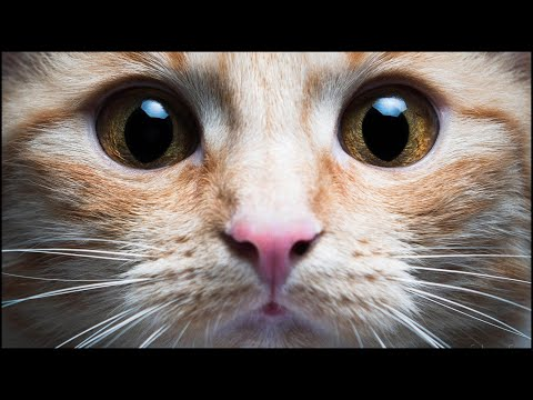 📣 Sonidos Para Que Tu Gato Venga 🐱 🐈
