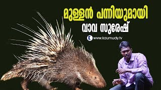 Video Wow! Porcupine released in the forest | Vava Suresh | Snakemaster MP3, 3GP, MP4, WEBM, AVI, FLV Januari 2019