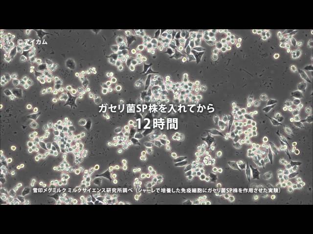 雪印メグミルクCM ガセリ菌SP株 向井理