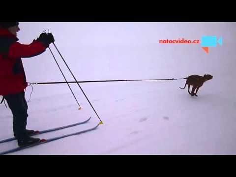 Skijoring v Adolfově