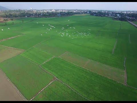 Tăng cường liên kết chuỗi, phát triển thị trường gạo