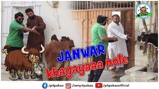   Janwar Kha Gaya Note Prank   By Nadir Ali In   P4 Pakao   2019