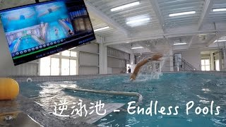 訓練科技 I 逆泳池 - Endless Pools