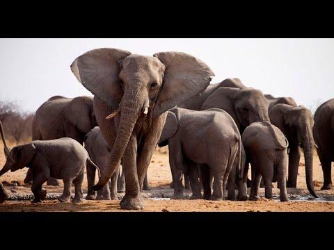 Iván Arenas muestra el increíble pene de un elefante