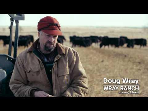 Backup plans for winter grazing