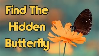 Can You Find The Hidden Butterfly? 90% Will Fail!