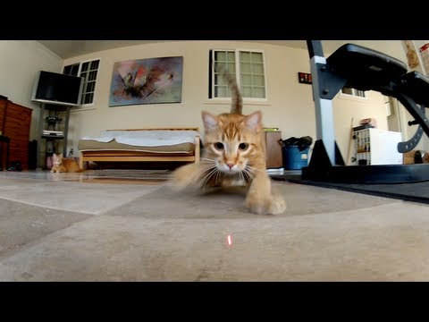 GoPro: Laser Cats - TV Commercial