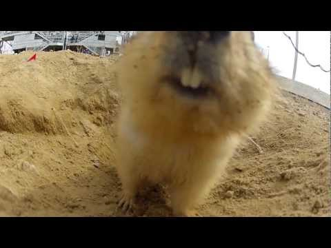 Baikonur Gopher