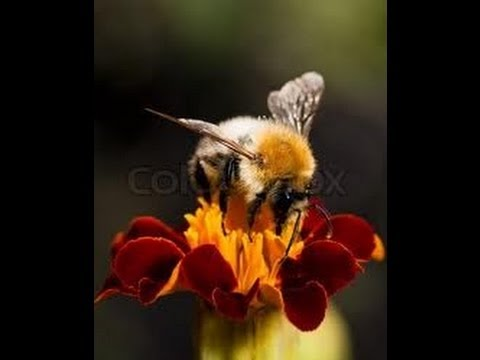Breaking News: Disappearing Bees signal Human Extinction!