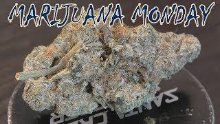 BC Big Bud Marijuana Monday by Urban Grower