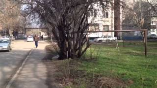 Krasnodar Russia  city photo : Walks in Krasnodar Russia Part 1