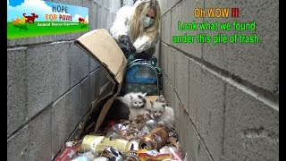 Oh WOW!!!  Look what we found under this pile of trash!!!  Please share. by Hope For Paws