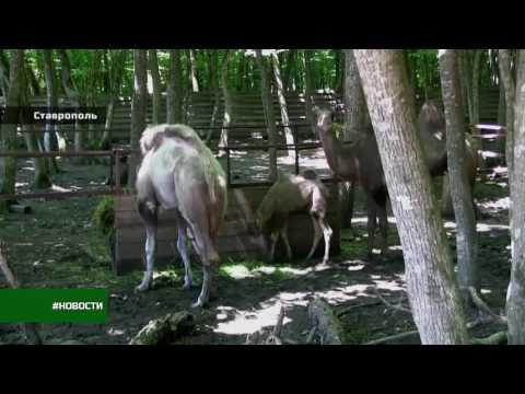 В зоопарке парка Победы настоящий бэби-бум! 26 регион