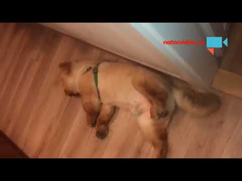 Teddyho siesta