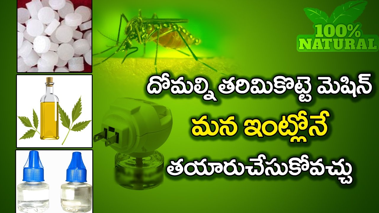 How To Kill Mosquitoes in Our Home Remedy Low cost 100%