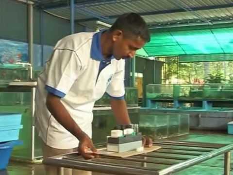 Aquatic Nurseries – From the Deep Blue Waters of Sri Lanka