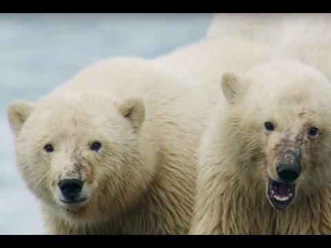 Путешествие в Арктику | Природа | Телеканал «Страна» (видео)