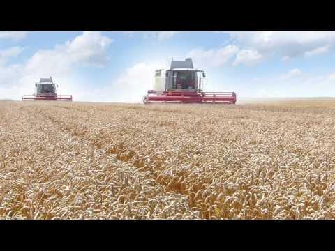 Wheat Products: Atta, Maida,Semolina, Bran from Diamond Roller Flour Mills: Corporate Video (Arabic)