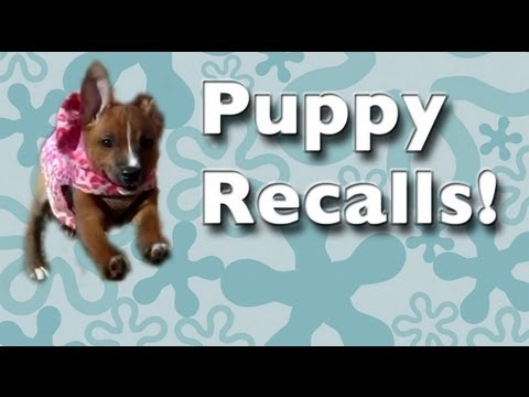 Teach any puppy to come when called – clicker dog training turorials