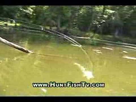 Fishing Mississippi River Backwater Bass Fishing