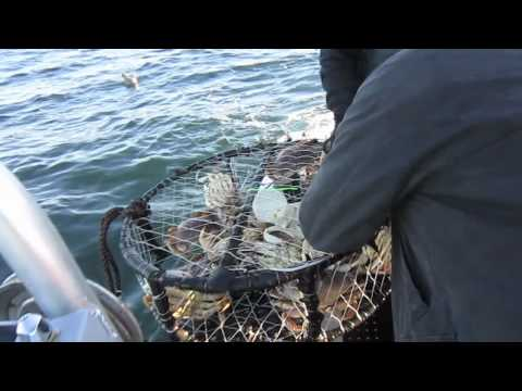 North Cal Sportfishing - Pre-Turkey Day Crabbing with North Cal Sportfishing - Khanh Tran. We got our Dungeness crab limits easily in just a few pulls as the pots were plugged with g...