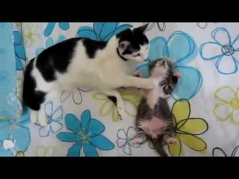 Adorable cette maman chat surveillant son chaton !