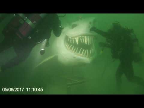 Requin Lac Neuchatel juin 17