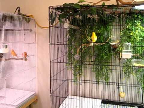 Canary - This is a spare room that was converted into a Canary room. There are four cages, each 7 ½'. I combined three 2 ½' flight cages and attached them with cable ...