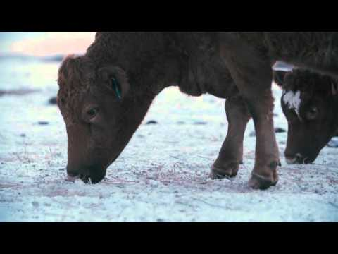 Winter grazing systems: Timing access to feed