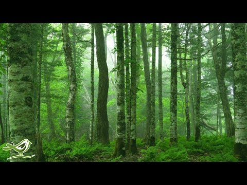 "Beautiful Relaxing Music: ""Deep in the Forest"" by Peder B. Helland (Official Video)"