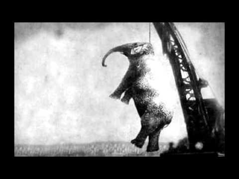 大象「瑪莉」受不了被虐待最終失控把馴獸師踩死,而觀看絞刑的觀眾們「冷血反應」讓人覺得心寒!