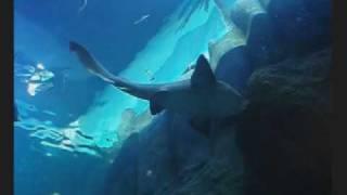 sea life oberhausen Sealife-Oberhausen - Impressionen