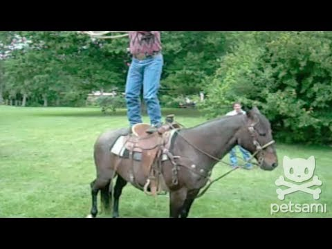 cooluntil - WATCH more funny animal videos: http://bit.ly/xTjPge A cowboy spins a lasso around his body while standing on top of a horse. GET ON THE LIST: http://on.fb.m...