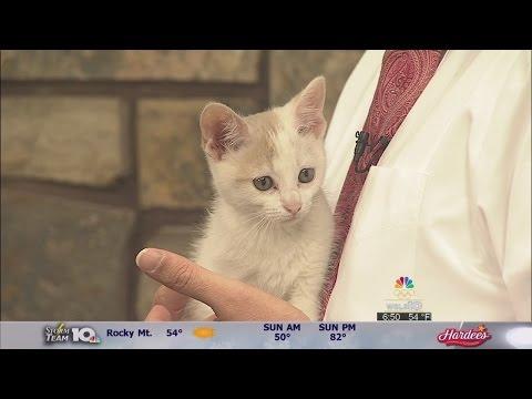 Meet this week's pets of the week from the Roanoke Valley SPCA