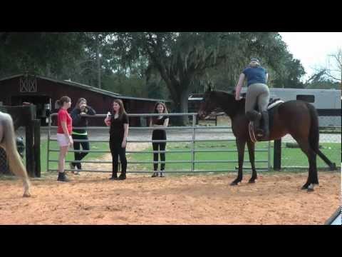 UNF Equestrian Club Jacksonville, FL
