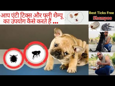 Fleas & Ticks Treatment For Puppies – Fast Action, Long Lasting Results in Dog & Cat. Bhola Shola