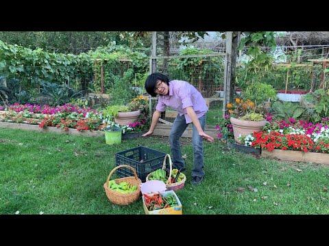 Final Garden Tour Of My Mom's Garden End Of Season Before Frost P1 | Ep25 Aiman's Backyard Gardening
