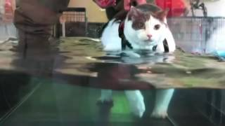Fat Cat Staying Alive 10 Hours