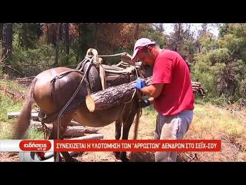 Συνεχίζεται η υλοτόμηση των «άρρωστων» δένδρων στο Σέιχ-Σου | 17/06/2019 | ΕΡΤ