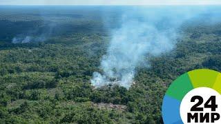 Амазонский апокалипсис: миллионы гектаров земли выжжено, гибнут редкие животные